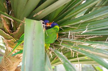 Small multicoloured parrots loverscouple