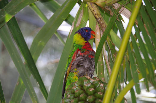 Small multicolored parrot in vegetation