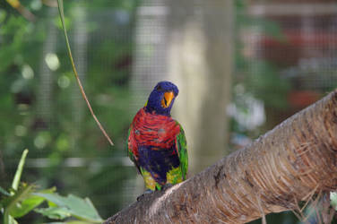 Small multicolored parrot on a branch