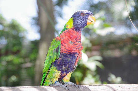 Small multicolored parrot on a branch 2