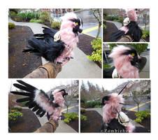 Bearded Vulture SOLD by ZombieHun