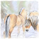 little -horse- fjord
