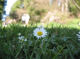 flower by grubygrub