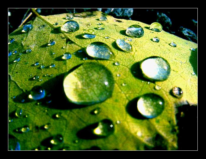 Autumn Leaf by mannisen