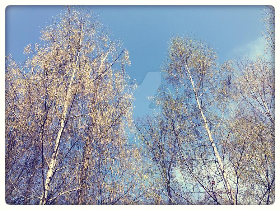 Blue sky. by Bellelina-64