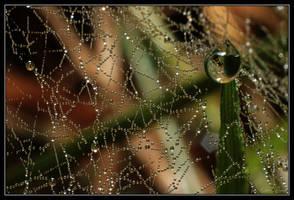 Spider drops