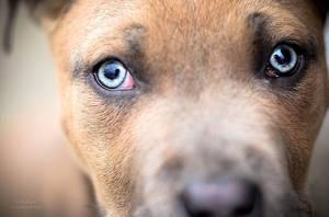 Hipnotizing eyes by PolfieDary