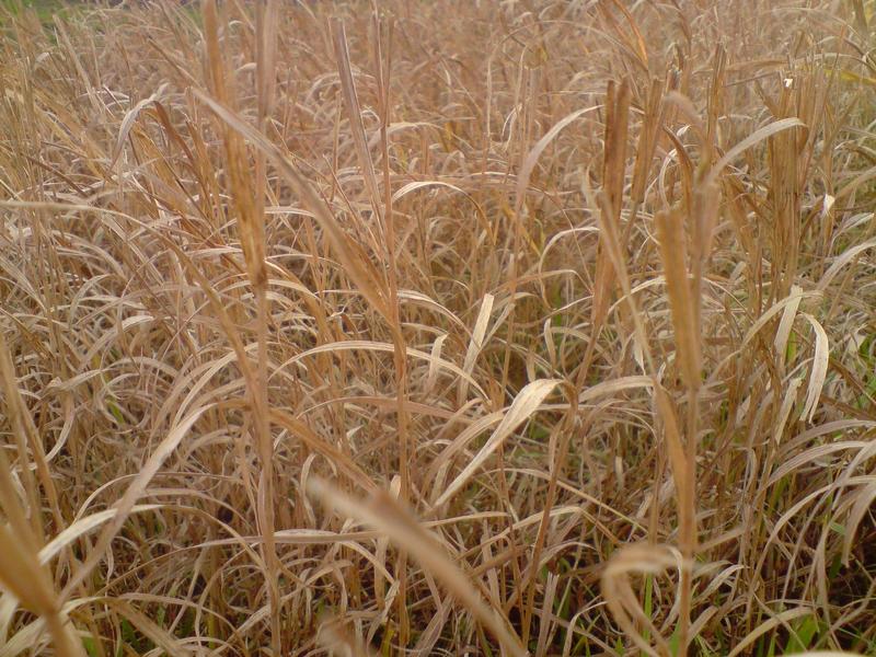 Autumn Grass by LoversHorizon