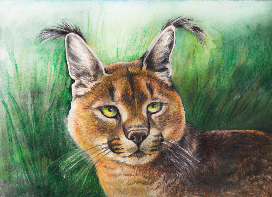 caracal by ledaryuga