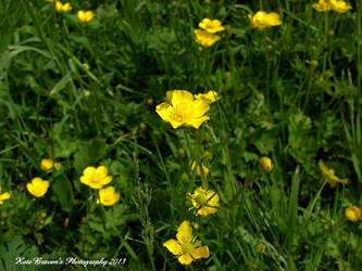 Buttercup 4 by justkebg
