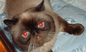 mycat2