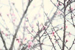 little spring things by 425Pigeons
