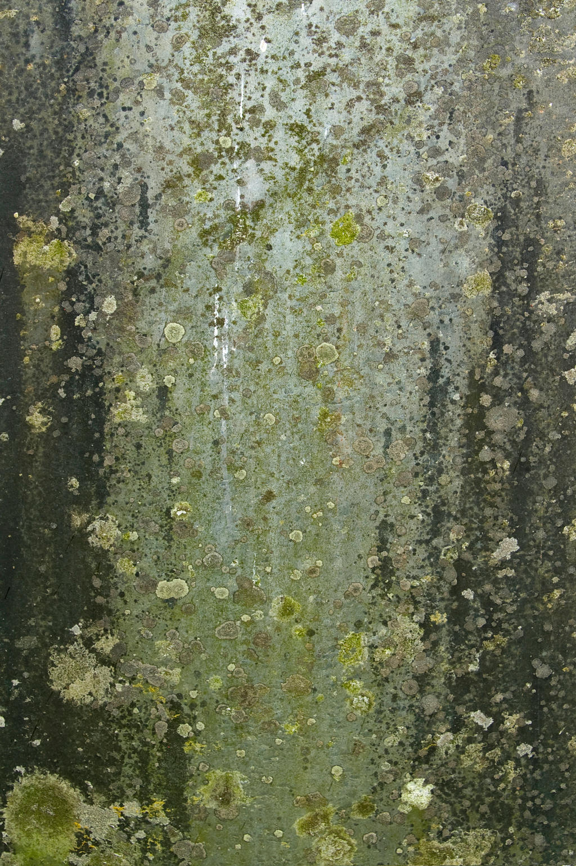 Grunge Texture 03 by goodtextures
