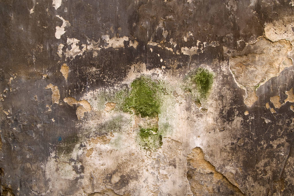 Grungy Plaster Texture 01 by SimoonMurray