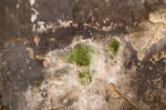 Grungy Plaster Texture 01