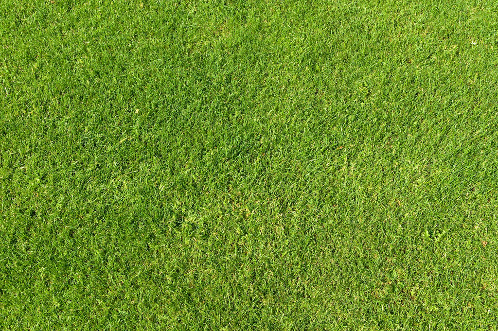 Green Grass Texture 01 by SimoonMurray