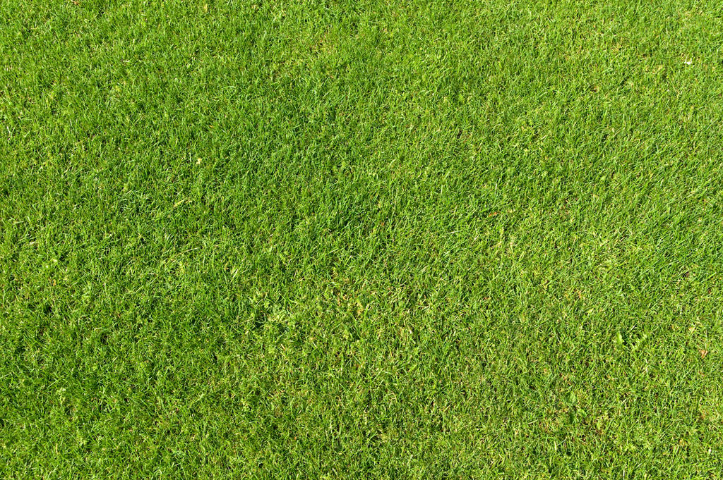 Green Grass Texture 01 by goodtextures