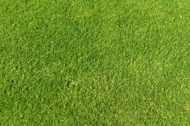 Green Grass Texture 01