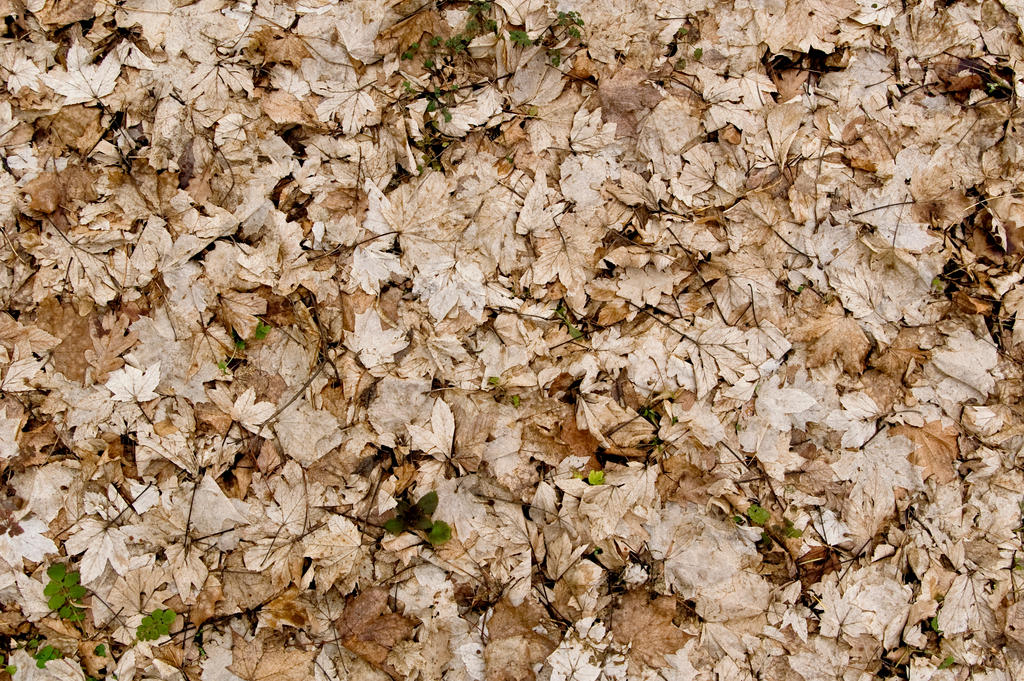 Dead Leaves Texture 01 by goodtextures