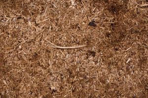 Wood Chippings Texture 01 by SimoonMurray