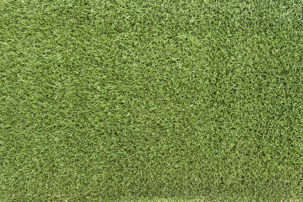 Grass Texture 02 by goodtextures