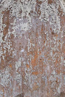Grungy Wood Texture by SimoonMurray