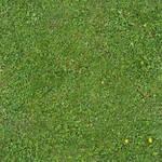 Seamless Green Grass Texture 01