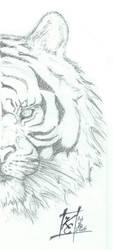Sunlight Tiger Scetch - Org. by Elskovsmaskinen