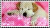Dog Person by KirbyTiffTuff4ever