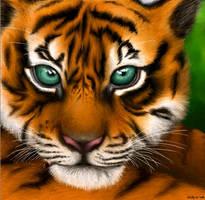 Tiger, FINISHED.