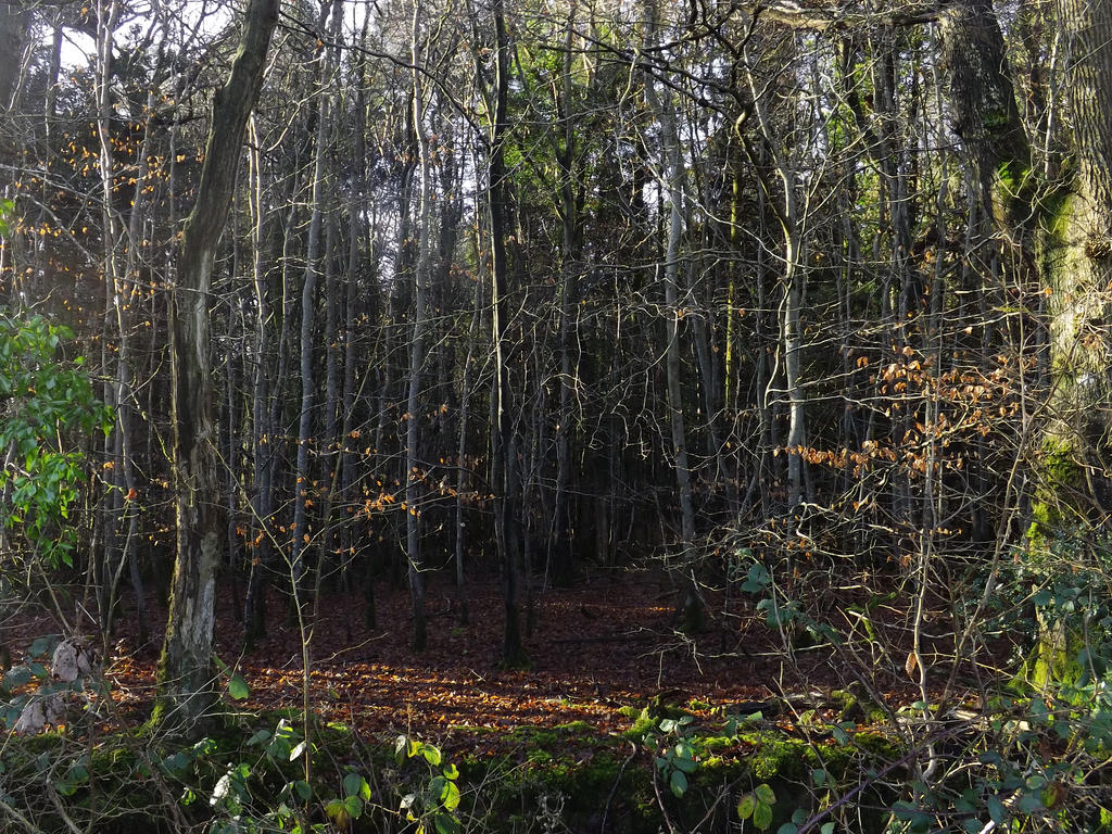 view in Decoy Wood by nonyeB