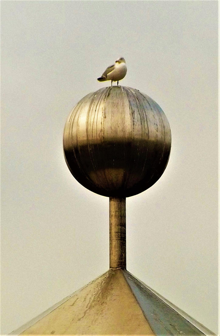 bird on the sphere by nonyeB