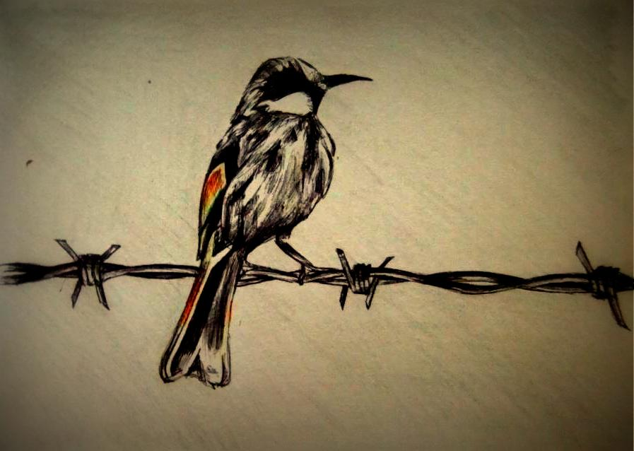 Bird on a barbed wire fence by nrobinson deviantart
