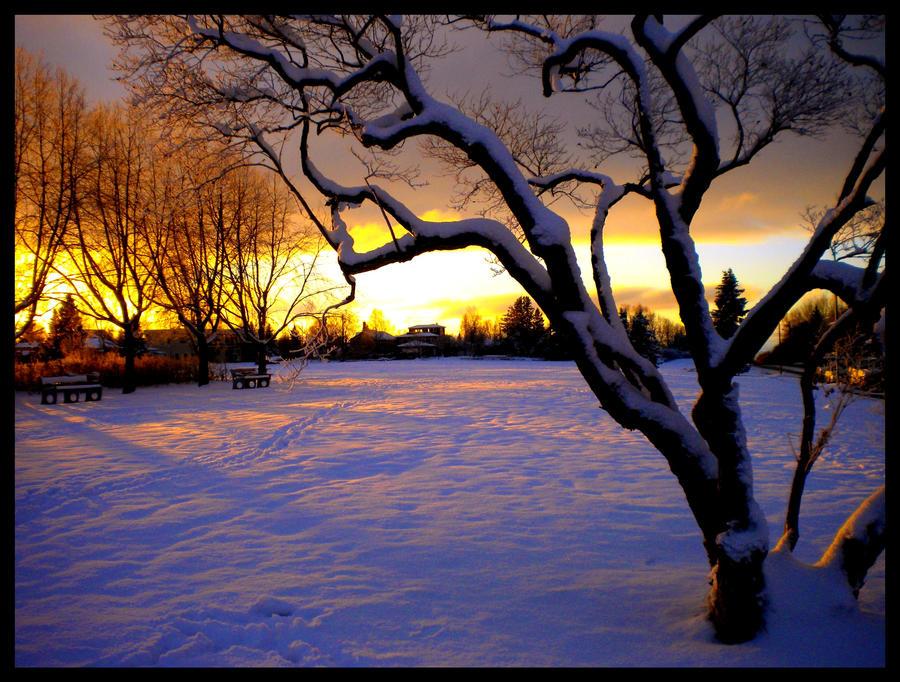 Golden Hour by flyr737