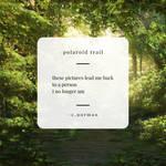 polaroid trail by herebewonder
