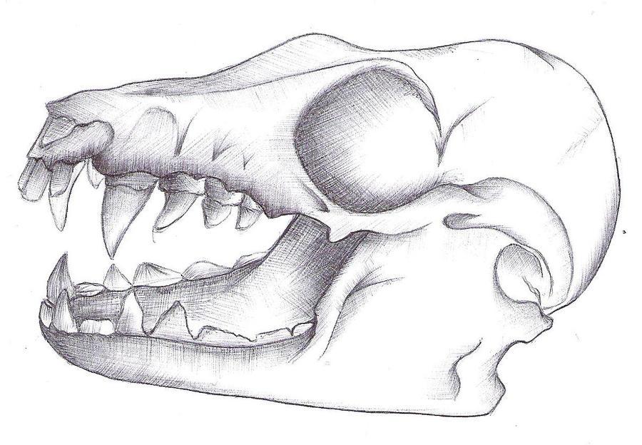 anatomy of fruit bat skul by jes-star on DeviantArt