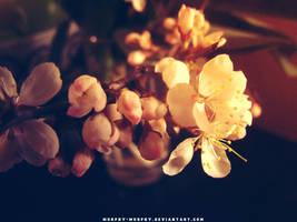 Blossoms by Murphy-Murphy