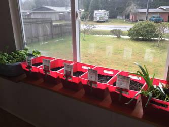 Spring gardening 2021