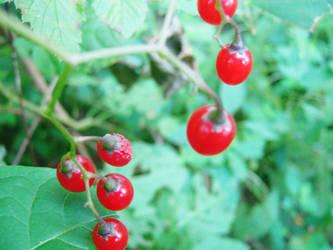 Berries II by insilverscript