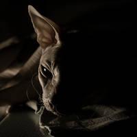 Batcat by MarieGrey