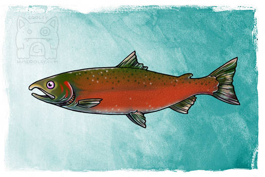 NPS Commission - Coho/Silver Salmon