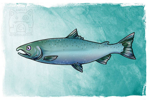 NPS Commission - Coho/Silver Salmon (Non-Spawning)