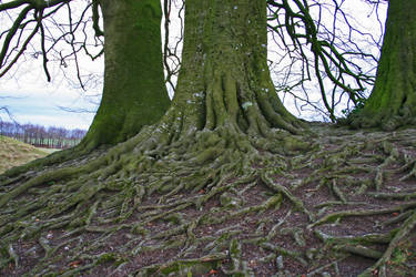 Ancient Roots in Avebury by littlelea