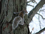little squirrely whirly