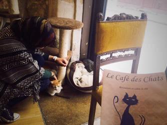 Au cafe des chats