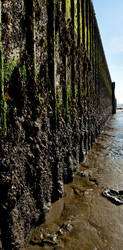 Mudflat Pier by AlexbytheSea