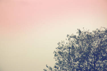 Trees by tommyhumps