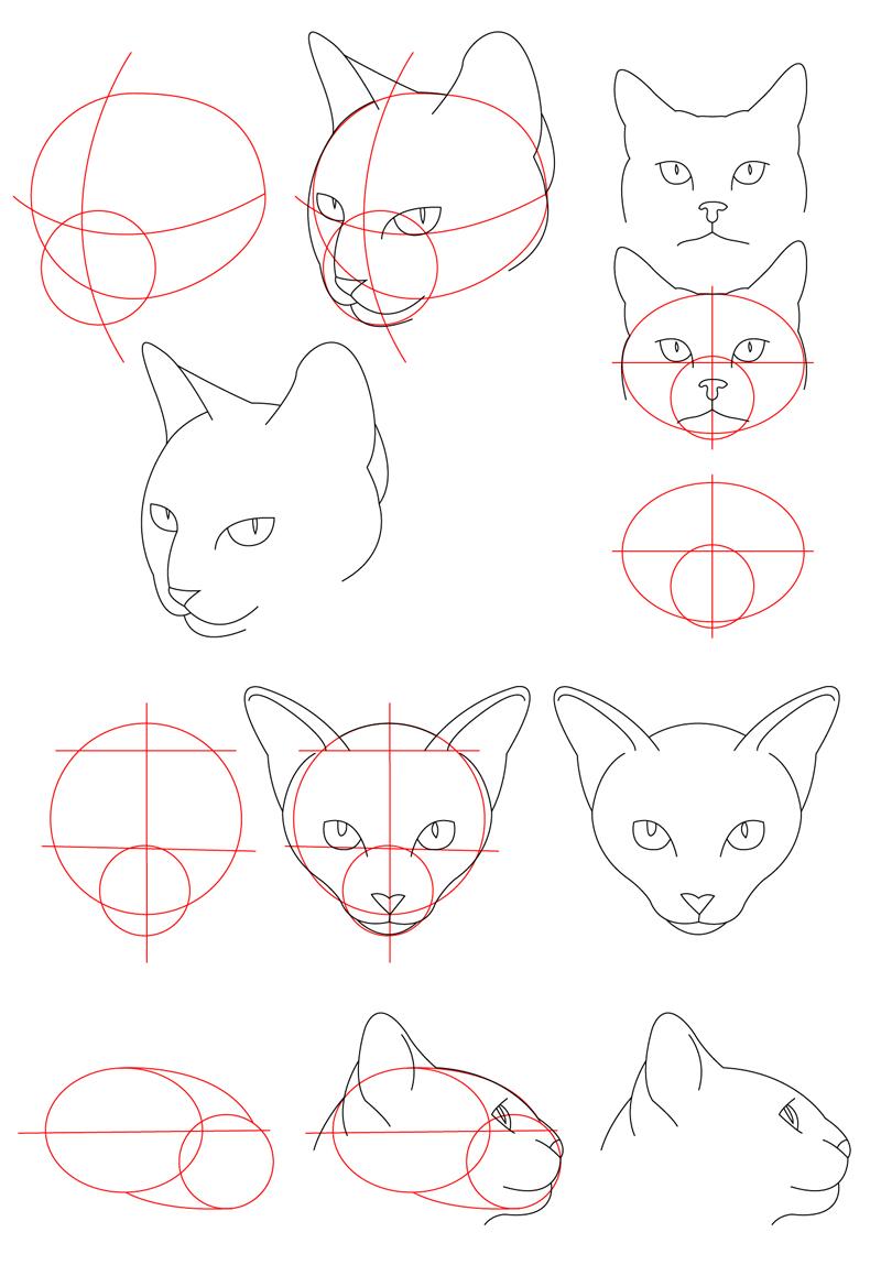 Uncategorized Cat Head Drawing cat tutorial head by perianardocyl on deviantart perianardocyl