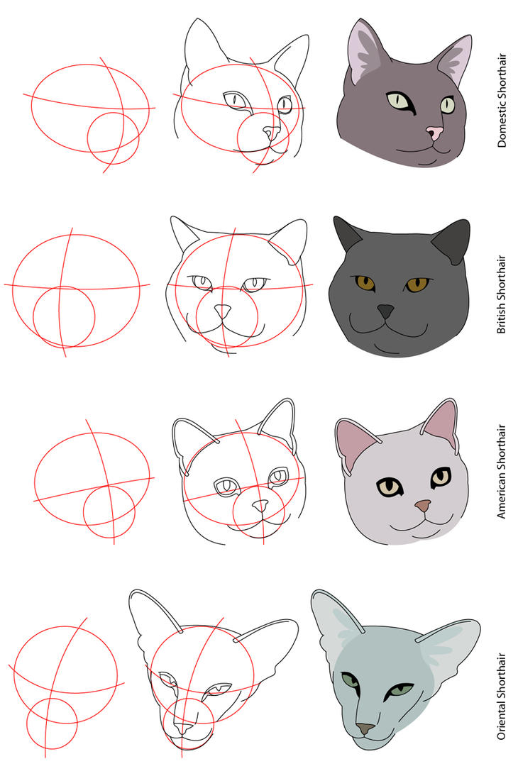 Cat Tutorial - Shorthairs by PerianArdocyl