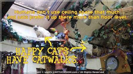 Happy Cats Have CatWalks by EARTHOVISION